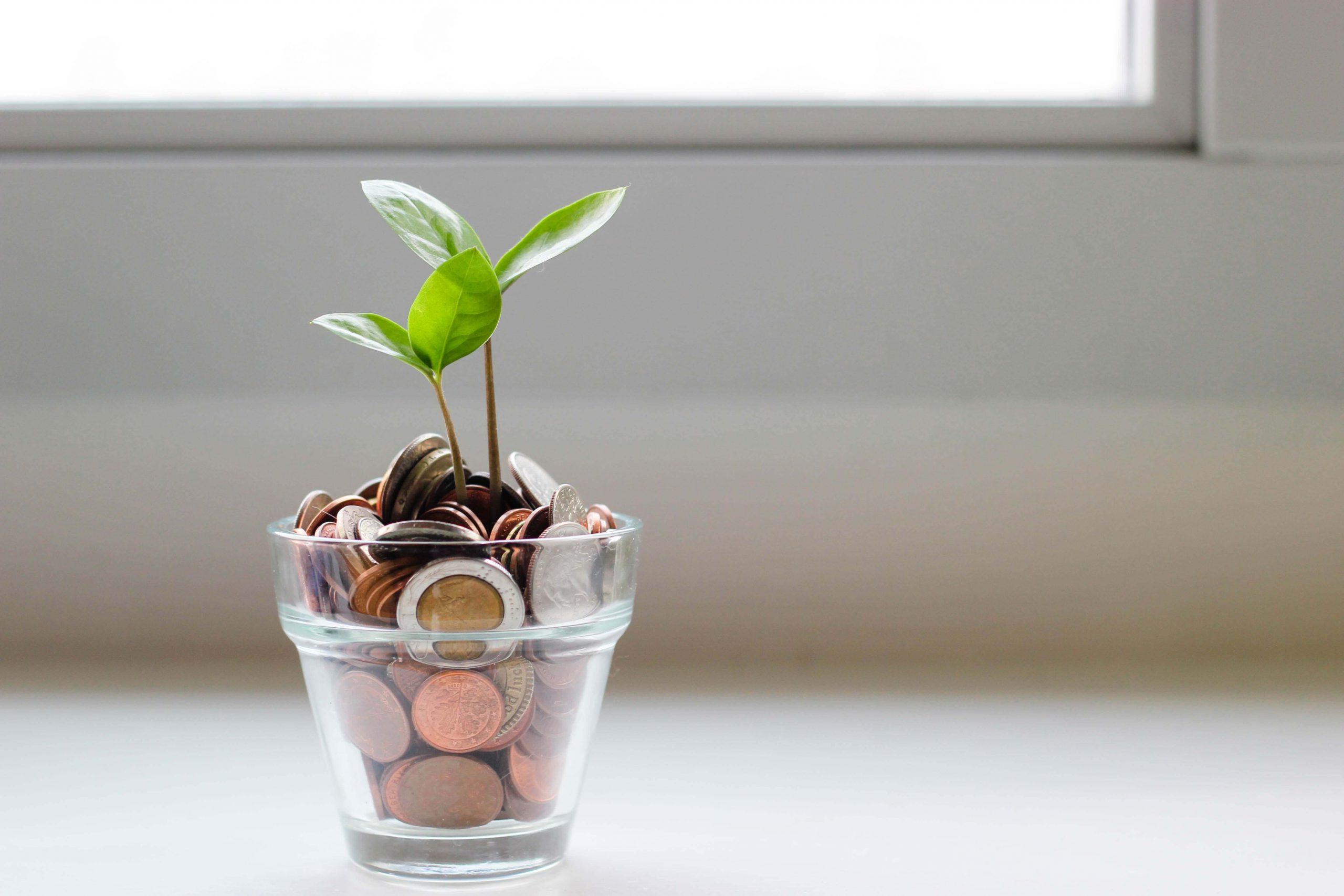 コインが詰まったグラスから植物が生えている画像