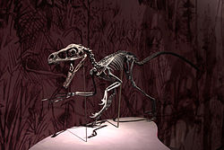 バンビラプトルの化石の画像