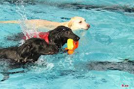 泳いでいる犬の写真