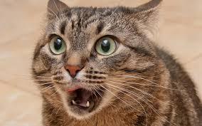 カラオケに驚いた猫