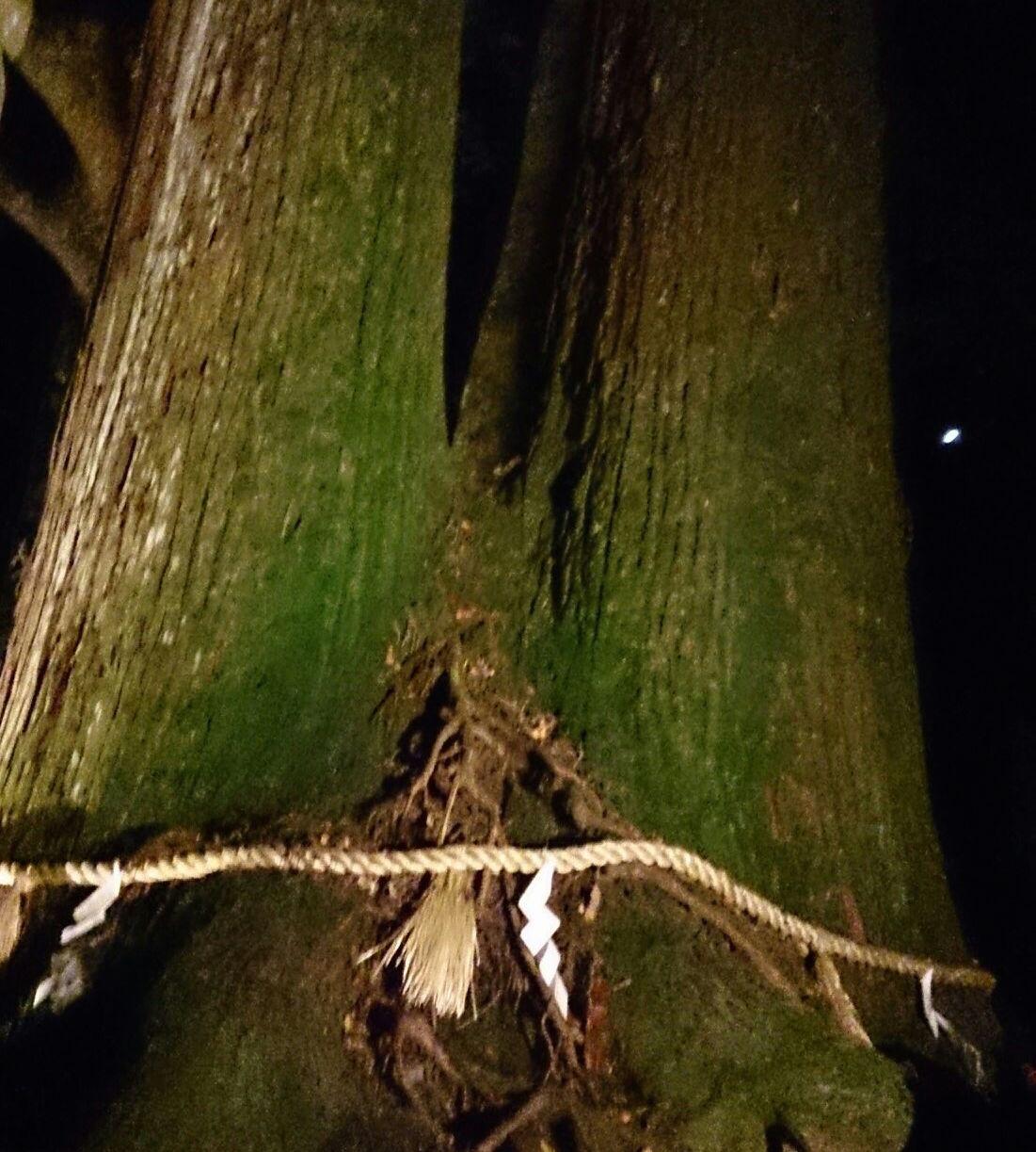 相生の杉の写真