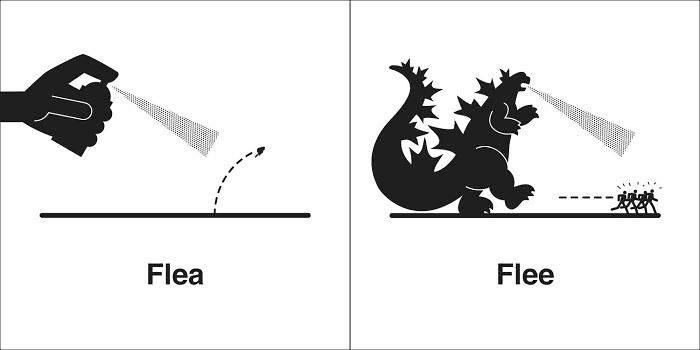 Homophones 同音異義語 - Flea と Flee